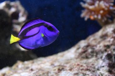 fish-1834805_640
